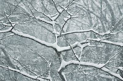 Catching The Snow Art Print by JAMART Photography