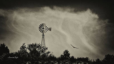 Photograph - Catching The Updraft by Karen Slagle