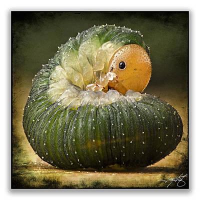 Isolated On Black Background Digital Art - Caterpillar 17 by Ingrid Smith-Johnsen