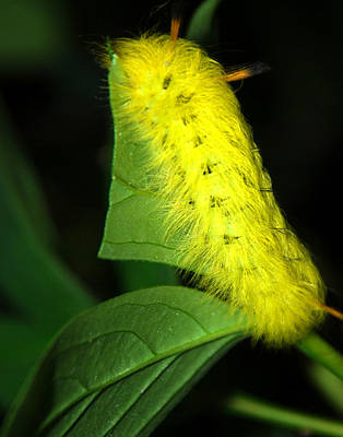 Photograph - Caterpillar by Mark Wiley