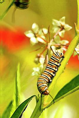 Butterfly Prey Photograph - Caterpillar Stage 2 by Geraldine Scull