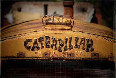 Photograph - Caterpillar by Teresa Wilson