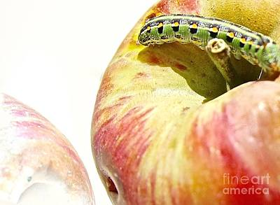 Shinx Photograph - Caterpillar Visits Apple by Elisabeth Derichs