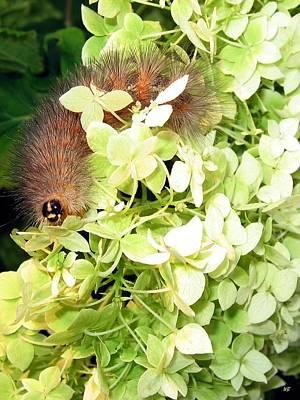 Photograph - Caterpillar by Will Borden
