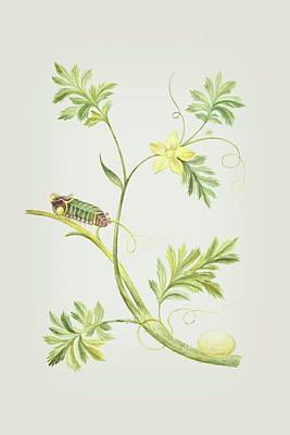 Mixed Media - Caterpillar With Pupa On A Plant By Cornelis Markee 1763 by Cornelis Markee