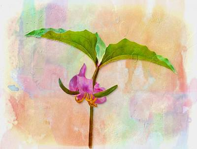 Photograph - Catesby's Trillium by Joe Duket