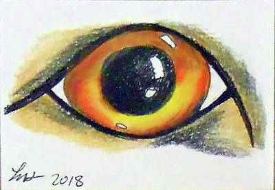 Drawing - Cateye by Loretta Nash