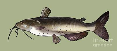 Catfish Drawing Art Print by A C