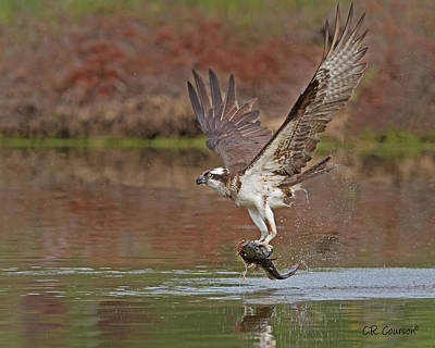 Photograph - Catfish For Dinner by CR Courson