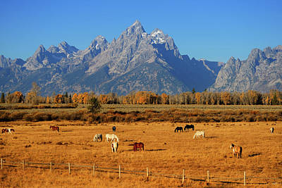 Photograph - Cathedral Autumn Horses by Greg Norrell