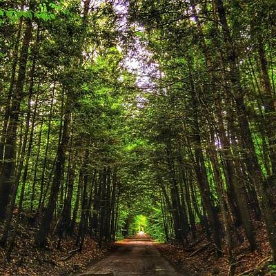 Photograph - Cathedral Forests by Nick Heap