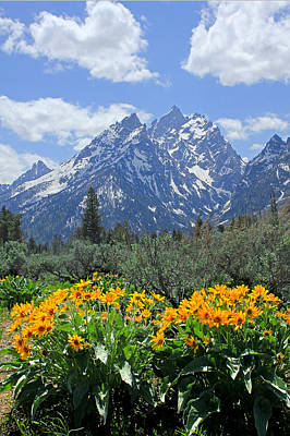 Photograph - Dm9328-cathedral Group Tetons  by Ed  Cooper Photography