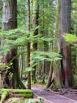 Photograph - Cathedral Grove by Keith Boone