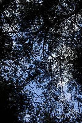 Photograph - Cathedral Grove Skyscape by Donna Munro