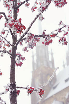 Photograph - Cathedral Of St Peter And Paul. Lacy Winter In Brno by Jenny Rainbow