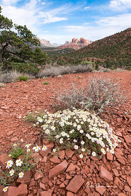 Photograph - Cathedral Rock And Wildflowers 2964 by Dan Beauvais