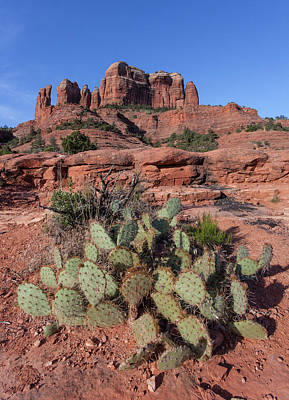 Photograph - Cathedral Rock Cactus Grove by Lon Dittrick
