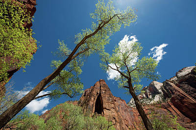 Photograph - Cathedral Rock In Zion National Park by Mike Shaw