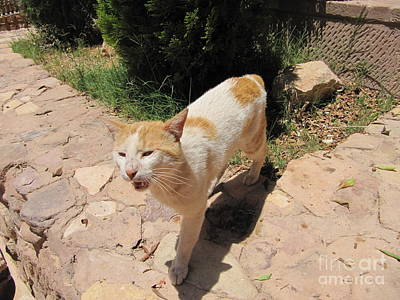 Photograph - Catmom Take Me Home by Donna L Munro