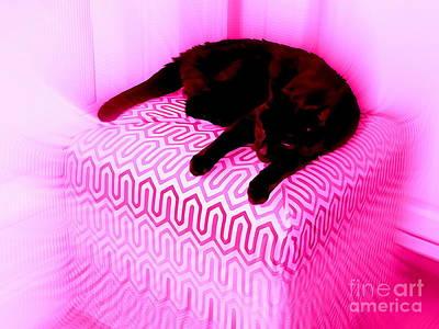 Digital Art - Catnap Dreams by Ed Weidman