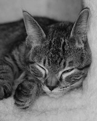 Photograph - Catnap by John Moyer