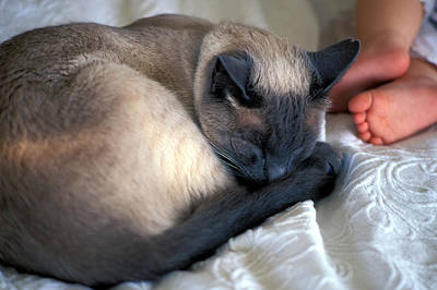 Print Cat Photograph - Catnap by Kathy Yates