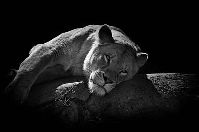 Photograph - Catnap by Matthew Blum