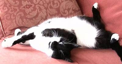 Photograph - Catnap - Sleeping Black And White Cat by Julia Woodman