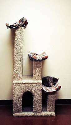 Kittie Photograph - Catnapping   Human Society Wisconsin by Laura Pineda