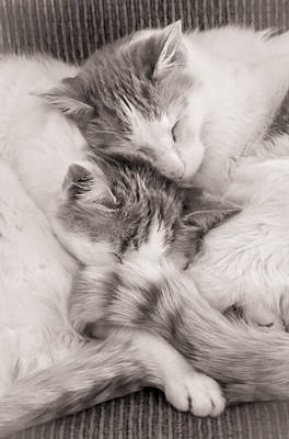 Catnap Photograph - Catnapping by Jim Hughes
