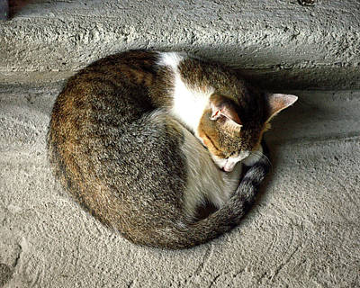 Photograph - Catnapping Market Cat In St. Lucia by Bill Swartwout Fine Art Photography