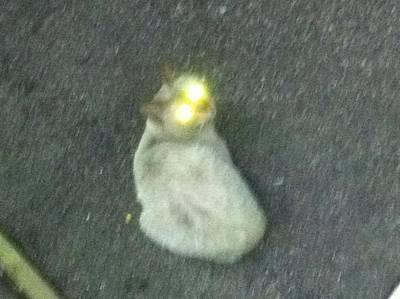 Cat Beam Original by Obayashi Satoshi