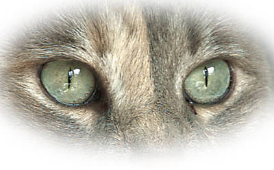 Photograph - Cat's Eyes 8 by Barry Doherty