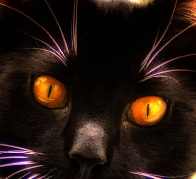 Pets Digital Art - Cats Eyes by Bill Cannon