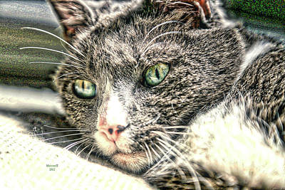 Photograph - Cats Eyes by Dennis Baswell