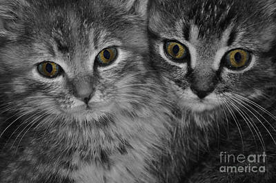 Photograph - Cats Eyes by Eric Liller