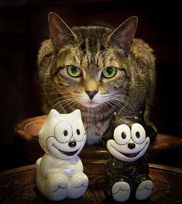 Toy Cat Photograph - Cats Eyes by Jean Noren
