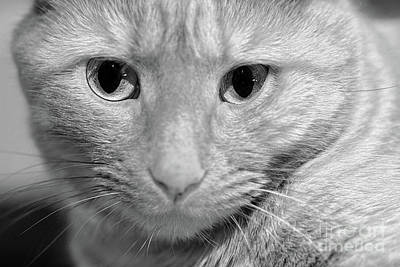 Photograph - Cats Eyes by Patrick M Lynch