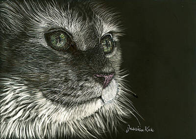 Mixed Media - Cat's Gaze by Jessica Kale