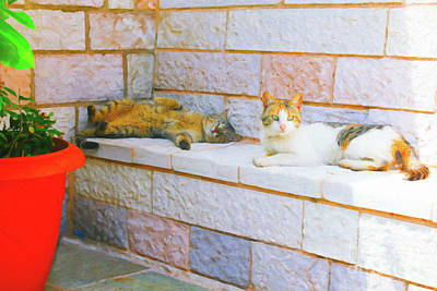 Digital Art - Cats In A Greek Convent by Donna L Munro