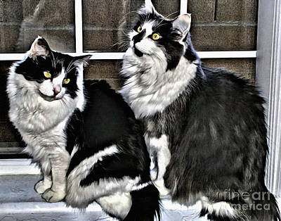 Photograph - Cats In The Window by Beauty For God