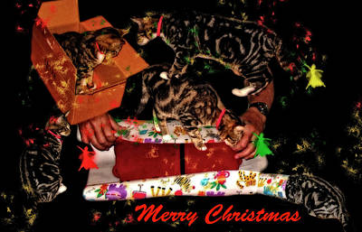 Photograph - Cats Merry Christmas Card by Kay Brewer