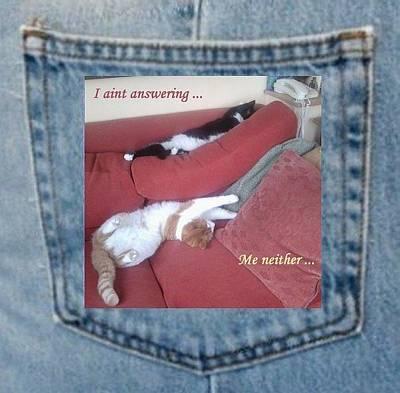 Photograph - Cats Not Answering Pocket Photo Fun by Julia Woodman