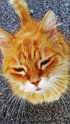Digital Art - Cats Of Amalfi - Amalfi, Italy by Joseph Hendrix