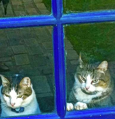 Photograph - Cats On Baylor Street by Cherylene Henderson
