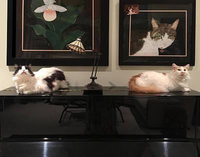 Photograph - Cat's On The Piano by Karen Zuk Rosenblatt