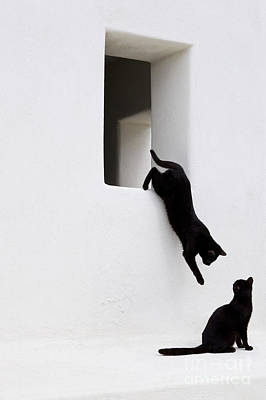 Photograph - Cats Playing, Greece by Jean-Louis Klein and Marie-Luce Hubert