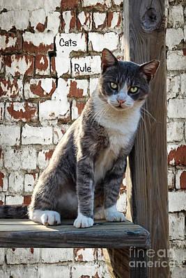 Photograph - Cats Rule by Ella Kaye Dickey