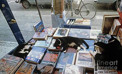 Photograph - Cats Sleeping In Display Bookstore Window by Jim Corwin