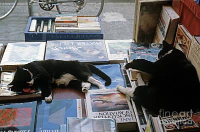 Photograph - Cats Sleeping On Books by Jim Corwin